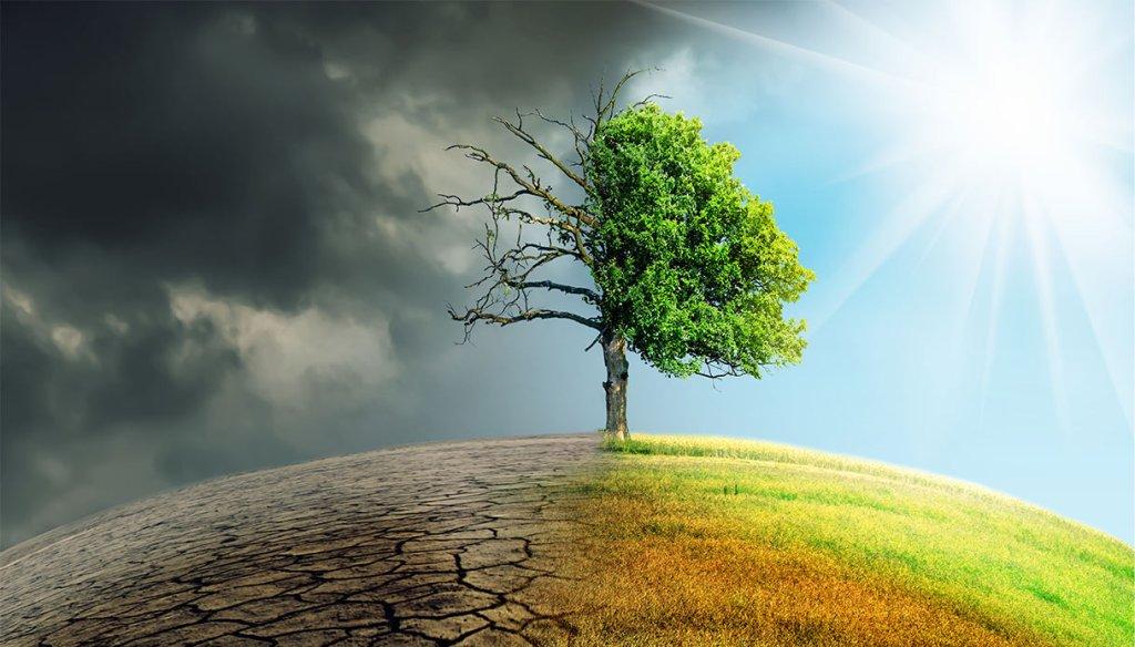 """Nuovo bando Cariplo """"Strategia Clima"""": 2,2 milioni per interventi di contrasto del cambiamento climatico"""