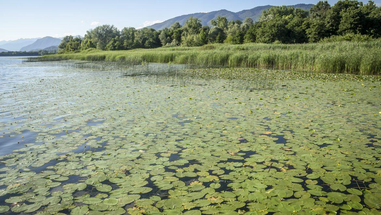 16 milioni di euro per la tutela dei laghi lombardi: il contributo dei tecnici facilitatori di Life Gestire 2020