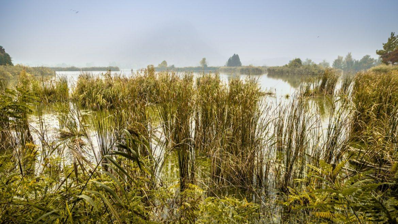 Stato critico della biodiversità in Italia: pubblicato il rapporto ISPRA