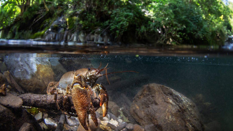 Il progetto Life Gestire 2020 e la conservazione della biodiversità: un webinar il 14 settembre